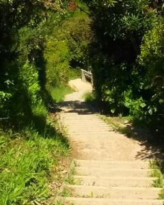 Mount Kaukau Walk, Wellington Day Walks