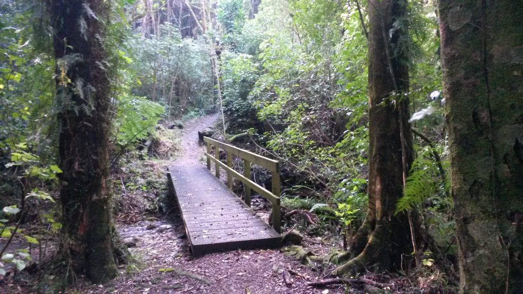 Colonial Knob Walkway, Wellington Day Walks