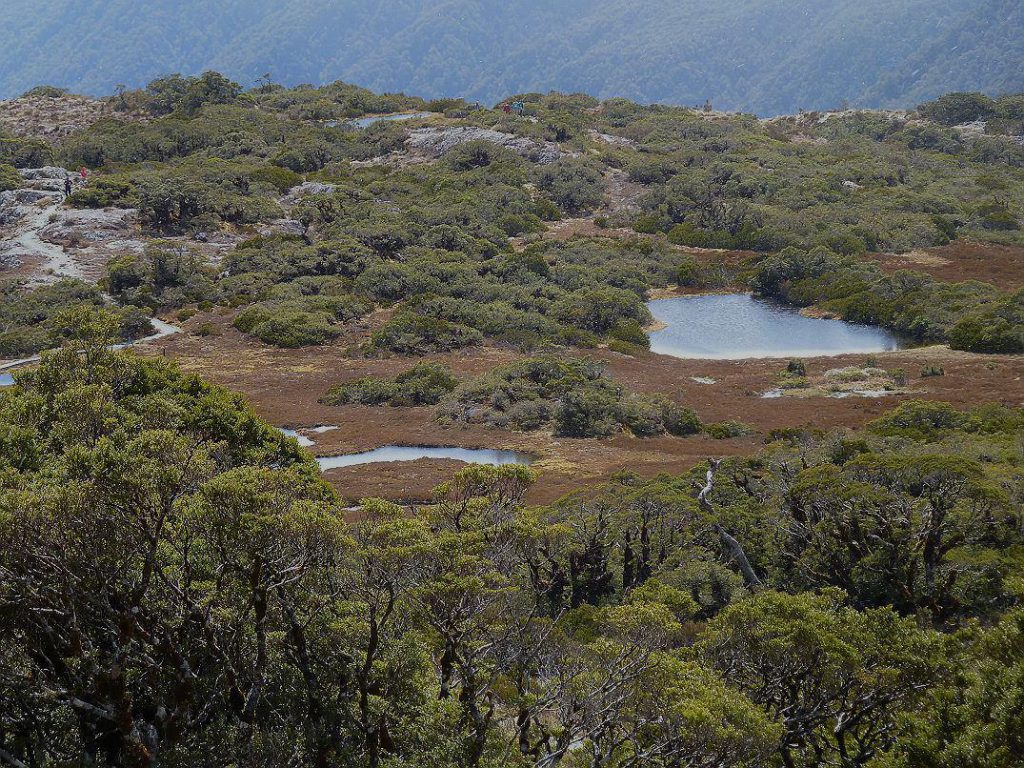 The Key Summit walk, Fiordland National Park