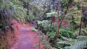 Korokoro stream track, belmont regional park, wellington day walks