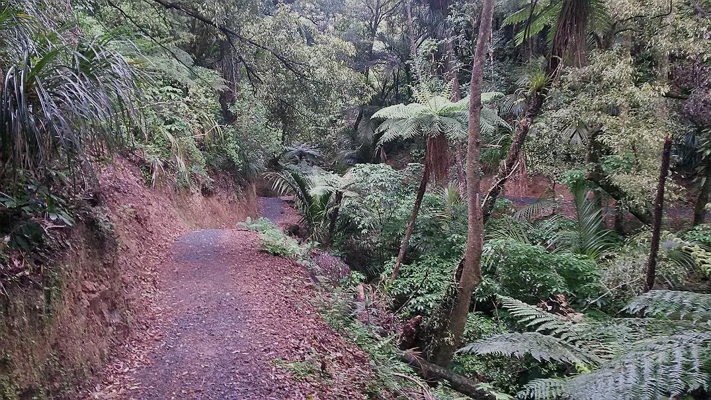 Korokoro stream track, belmont trig walk, belmont regional park, wellington day walks