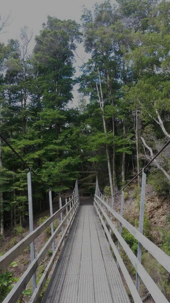 The Cattle Ridge Walk, Rimutaka Forest Park, Wellington Day Walks