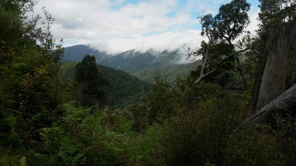 Mt McKerrow Walk, Rimutaka Forest Park, Wellington Day Walks