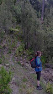 Tauherenikau Valley Walk, Tararua Forest Park, Wellington Day Walks
