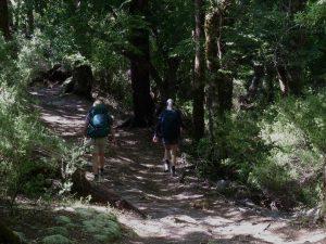 Panekire Day Walk, Lake Waikaremoana