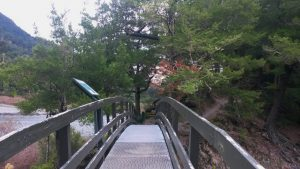 Rimutaka Forest Park, Wellington Day Walks