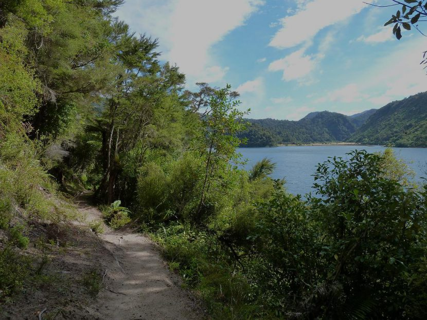 Whanganui Hut to Marauiti Hut Day Walk, Lake Waikaremoana, Day Walks NZ