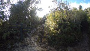 Dobson Loop Track, Tararua Forest Park, Wellington Day Walks