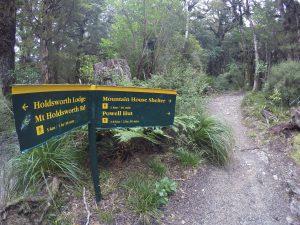 Mountain House Loop Track, Tararua Forest Park, Wellington Day Walks