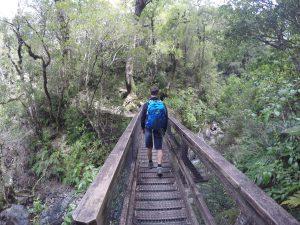 Mountain House Loop Track, Tararua Forest Park, Wellington Walks
